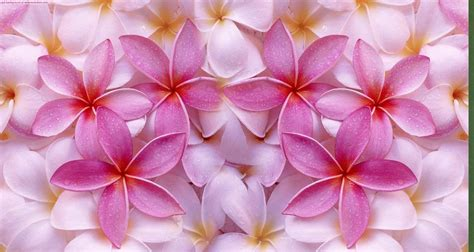 Flower Background Flowers Backgrounds Wallpaper Cave