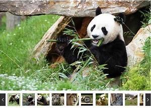 Billet Zoo De Beauval Leclerc : zoo de beauval billets moins chers 21 5 ~ Medecine-chirurgie-esthetiques.com Avis de Voitures