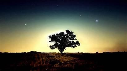 Tree Wallpapers Backgrounds Background Hope Choose Enjoyed