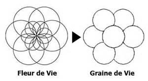 Fleur De Vie Signification by Le Secret De La Fleur De Vie