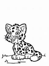 Tiger Coloring Cub Cartoon Leopard Drawing Cubs Pages Colouring Tigers Gecko Drawings Cheetah Colornimbus Getdrawings Amur sketch template