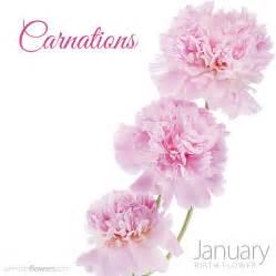 the january birth flower carnations pollennation