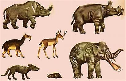 Prehistoric Mammals Strange Animals Uintatherium Macrauchenia Ice