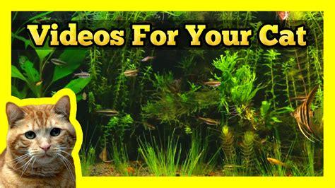 videos for your cat longest aquarium fish tank video on