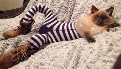15 cats in tights you can 39 t help but laugh at