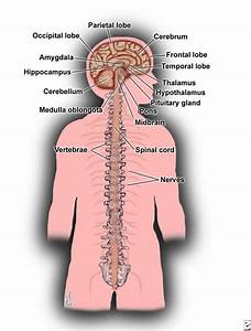 What Is Multiple Sclerosis  Ms Symptoms  Causes  U0026 Treatment