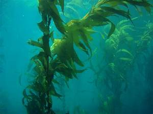 Kelp Forest | California Science Center
