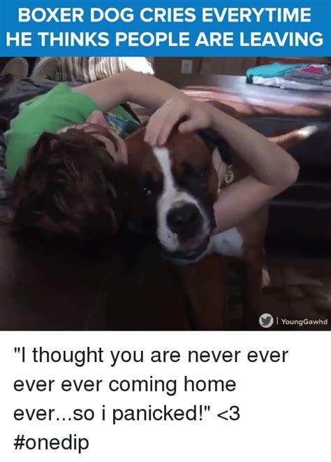 Boxer Meme 25 Best Memes About Boxer Dogs Boxer Dogs Memes