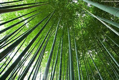 chambre d hotes anduze bambouseraie anduze la bambouseraie en cévennes