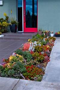 Amazing, Succulent, Garden, Ideas, You, Shouldn, U0026, 39, T, Miss