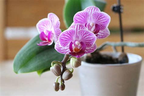 orchideen schneiden wurzeln bei orchideen schneiden darf luftwurzeln entfernen