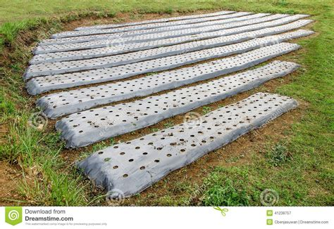 prepare soil of vegetables stock photo image 41238757