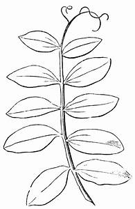 Simple Leaf Template - Coloring Home