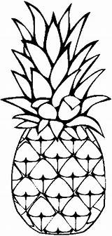 Pineapple Coloring Clipart Advertisement Fruits sketch template