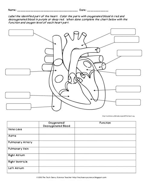 human anatomy labeling worksheets human body system