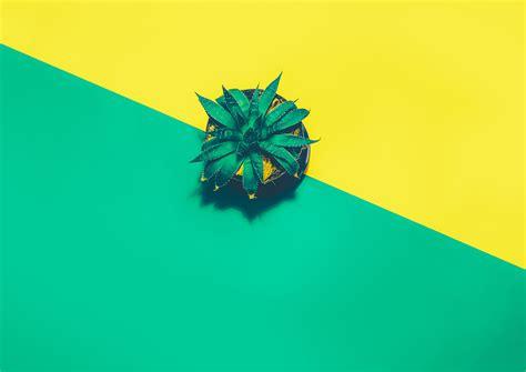 wallpaper pineapple minimal  photography