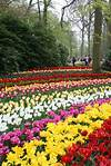 31 best images about Photos of beautiful flower garden in beautiful flower gardens pinterest