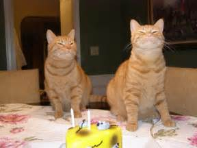 cat birthday cool pictures happy birthday cats