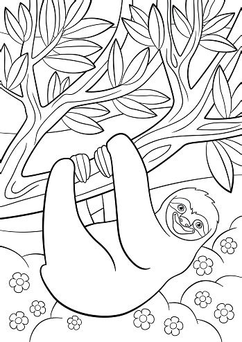 coloring pages cute lazy sloth   tree stock