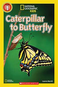 Caterpillar To Butterfly By Laura Marsh