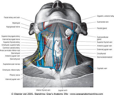 internal jugular vein catheterization review  critical