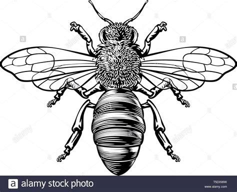 honey bumble bee woodcut vintage bumblebee drawing stock