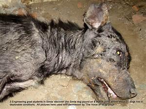 shimla stray dog pound