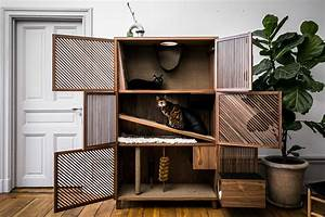 Modern, Cat, House, Gives, Cats, 10, Fun, Things