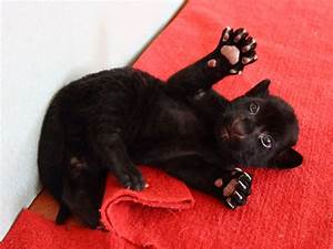 Black Tiger Cub Born in China : People.com