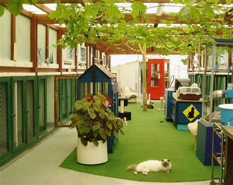 seaview cattery