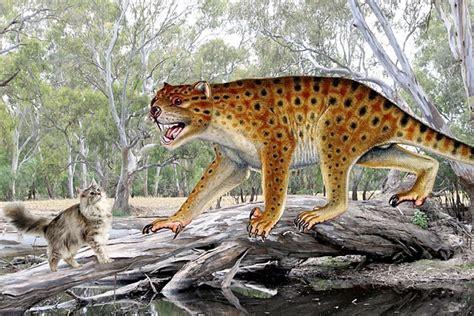 marsupial lion prehistoric marsupials australia megafauna thylacoleo giant skull carnifex tooth metres long supersize meet kangaroo saurus grew centimetres kilograms