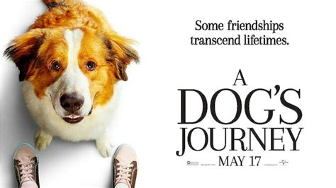 dogs journey     movies