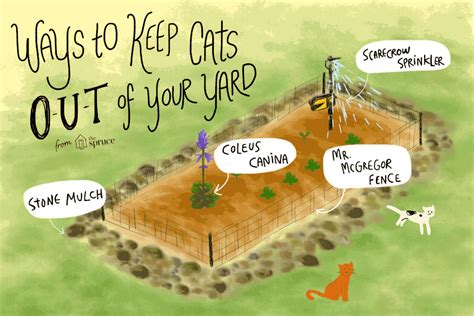 Keep Cats In Backyard by 10 Ways To Keep Cats Out Of Your Yard Or Garden