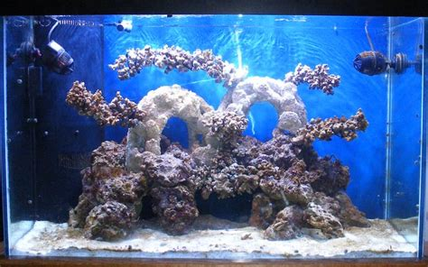 Live Rock Aquascape Designs by Garf Morell S Vho Reef Aquarium Update
