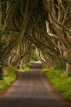 "foto de Rosa Moss Bridges"" Ireland Places to travel Beautiful"