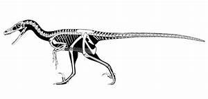 How To Draw Dinosaur Skeleton | Car Interior Design