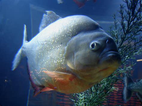 Bid Fish R