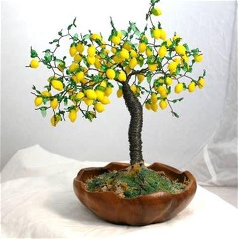 Limone In Vaso Cure by Come Curare Un Bonsai Di Limone Fare Bonsai Curare Un