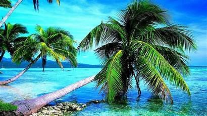 Palm Trees Wallpapers 4k Tree Nature Desktop