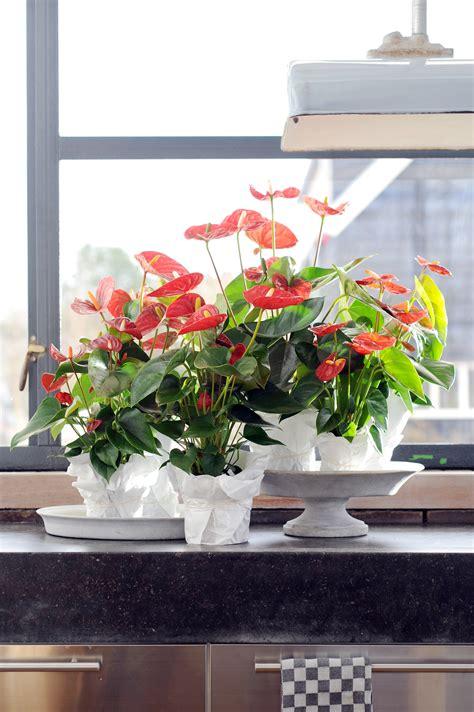 exotische potplanten met bloem bloemen in pot planten simple kunstplant cycas palm in