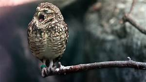 Wallpaper Owl  Cute Animals  Animals  12807