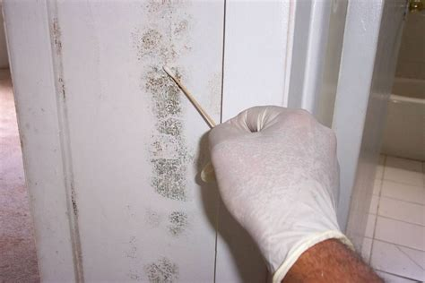 detect household mould