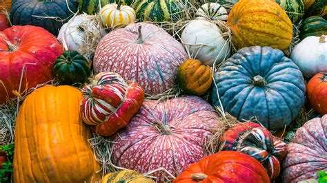 Desktop Fall Backgrounds Pumpkins by Pumpkins Wallpapers For Desktop 55 Pictures
