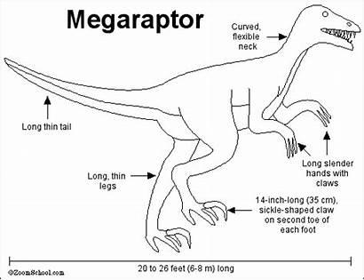 Megaraptor Dinosaur Dinosaurs Meat Eating Wikia Wiki