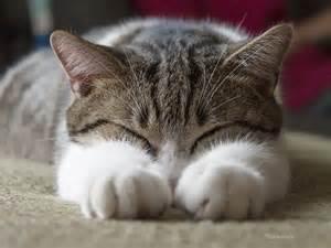 cat disease feline disease and its prevalence