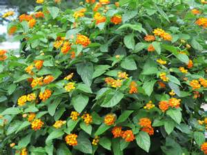 Small Bush with Orange Flowers