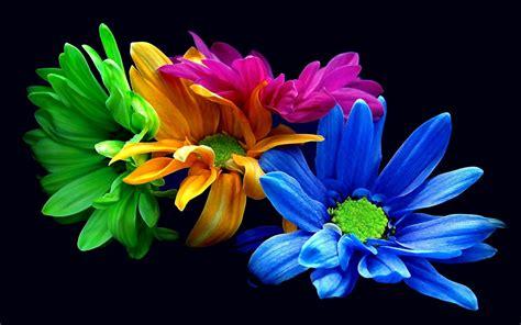 wallpaper gambar bunga cantik hd saku share