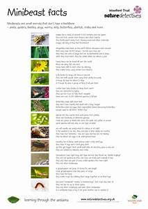 Pirate Scavenger Hunt By Naturedetectives - Teaching Resources