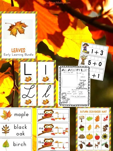 the best kindergarten and preschool leaf theme lesson plan 322 | leaves preschool kindergarten theme pin2 768x1024