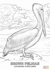 Louisiana State Bird coloring page | Free Printable ...